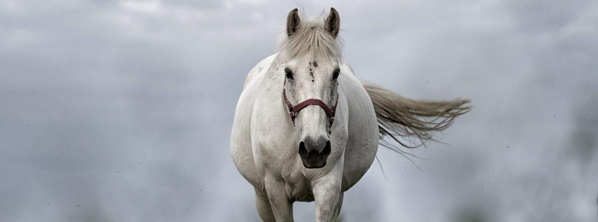 """""""Soletherapie für Pferde am Bodensee"""""""